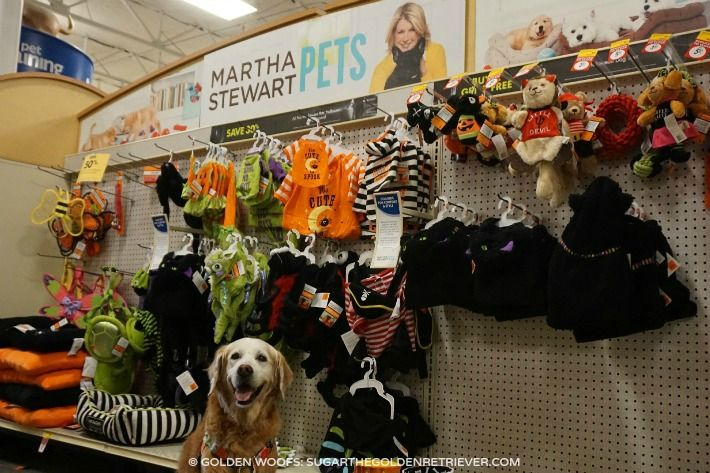 Martha Stewart Halloween | Martha Stewart Pets Halloween Collection - Sugar The Golden Retriever