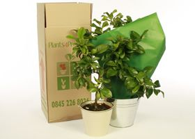 Plants Delivered by Post and Courier UK wide
