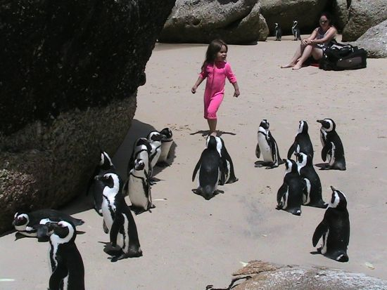 African Penguins - Boulders Beach, Simon's Town, Cape Town, South Africa