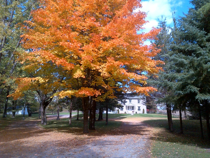 Tree-lined driveway in Campbellford.