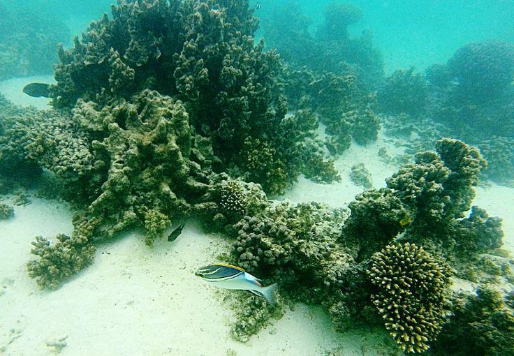 Snorkelling - Turquoise Bay, Cap Range NP WA