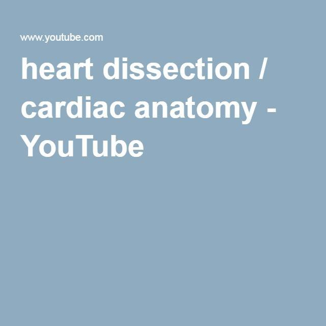 heart dissection / cardiac anatomy - YouTube