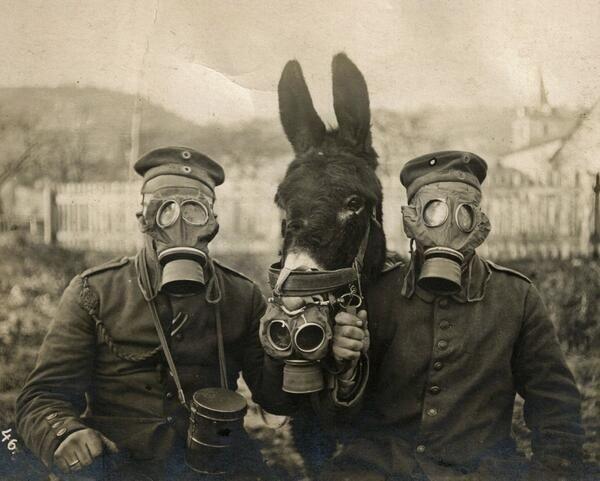 Máscaras antigas alemanas en 1916. [Hasta el burro tiene una mascara!]