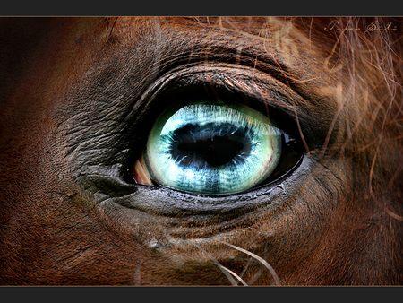 Emerald horse Eye