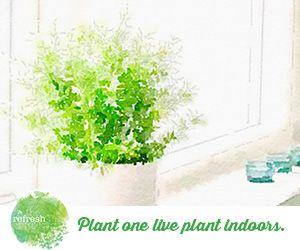 Top 5 indoor plants: http://www.therefreshproject.com.au/in-the-garden/top-5-indoor-plants-to-improve-health/