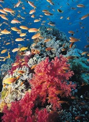 parque nacional corales del rosario, colombia