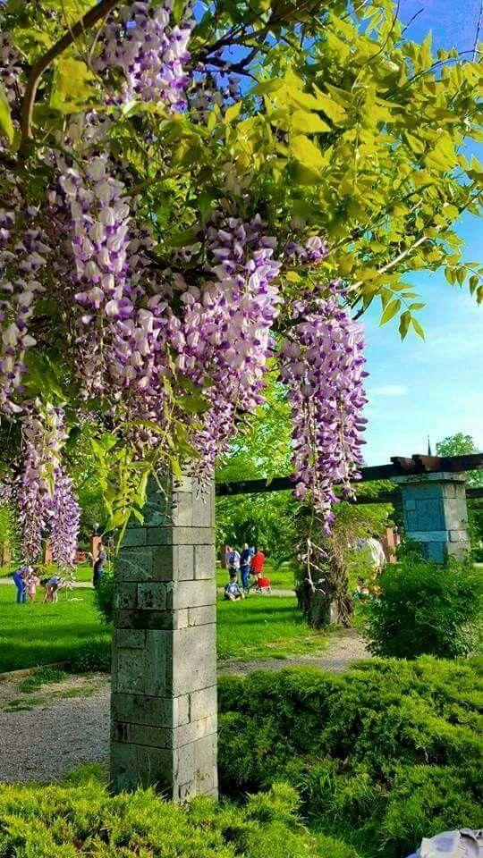 Herastrau Park - photo by Sabryna Elena
