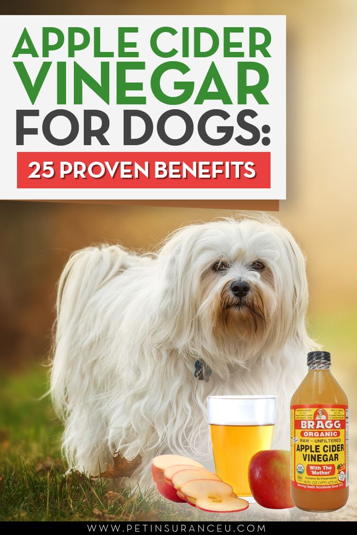 pple Cider Vinegar Dog Treatments  Apple cider vinegar, or ACV, is by no means new. In fact, people have been using it for centuries. But ACV is not just beneficial for people and, in recent years, it has become increasingly popular in the world of natural or holistic pet care.