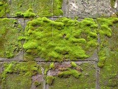 Mousse, Mur, Vert, Pierre, Texture