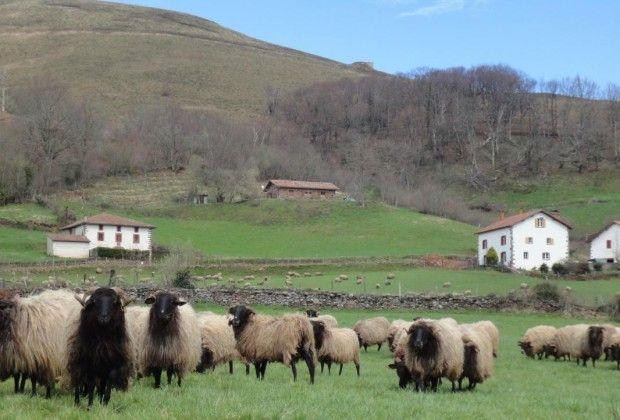 Gîte à Hosta, Pyrénées Atlantiques, Etxe-tipia - Gîtes de France Béarn & Pays Basque