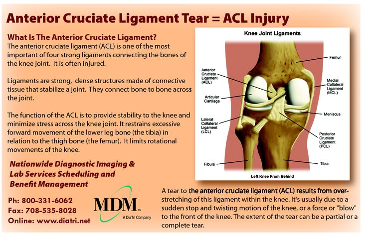 anterior cruciate ligament research paper It has been well recognized that multiple factors, whether individually or in combination, contribute to noncontact anterior cruciate ligament (acl) injury the ongoing mission of the acl research retreat is to bring clinicians and researchers together to present and discuss the most recent advances.