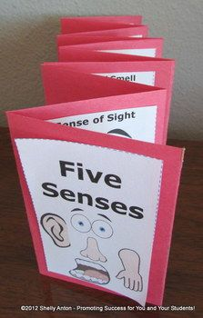 Five Senses: Five Senses Accordion Book - Your students will love this hands-on five senses craftivity. The students will make a five senses accordion book. The students will need to research fun facts about each of the five senses.