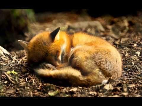 ▶ ▶ Schlafe, mein Prinzchen (Andreas Scholl & Tamar Halperin) - YouTube