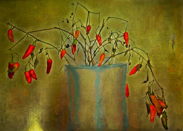 """Hot Pepper Plant"" ...enhanced photographic print..."