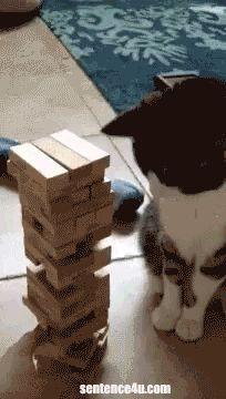 Funny Cat GIF Cats are sore losers.   Cats are sore losers.