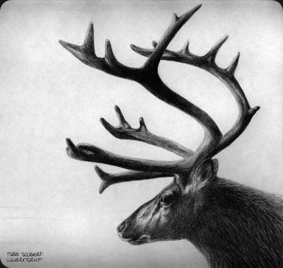 reinsdyr - miss talseth illustration