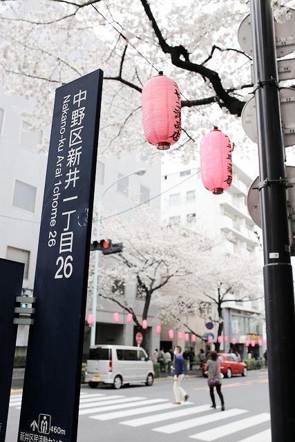 Japan zur Kirschblüte #sakura