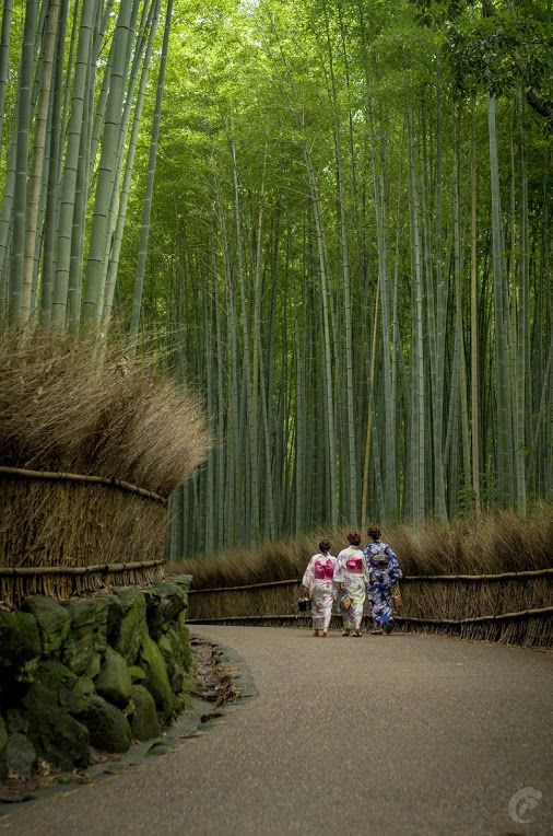 Arishiyama Bamboo grove, Kyoto, Japan. My dad grew up in that town^^