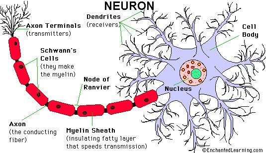 The Neuron A Hackers Perspective From: http://ift.tt/2smxcFw - https://www.kali.org