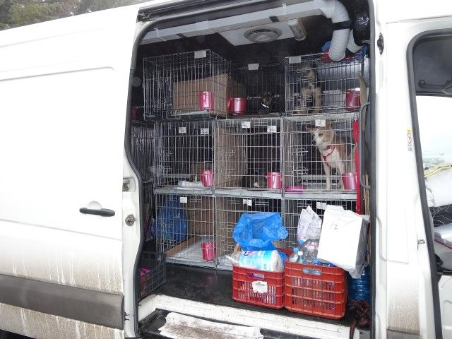 """Unser Rettungszentrum hat seine eigene Eintragung in das Tierärztliche Kontroll Datenbanksystem """"TRACES"""", so dass unsere Tiere über die EU-weit erforderliche Gesundheitsbescheinigung verfügen, welche für einen legalen Transport erforderlich ist. Wir können diese nicht nur für die Annahme von Tieren in Deutschland, sondern auch in Österreich, Holland oder Schweiz zur verfügung stellen."""