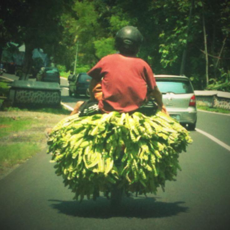 So Indonesia,  petaiii...