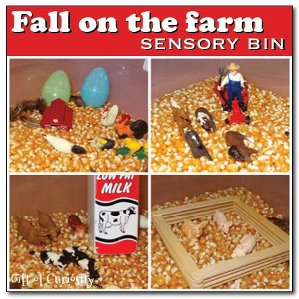 Fall on the farm sensory bin using dried corn as the base and Safari Ltd TOOB figures || Gift of Curiosity
