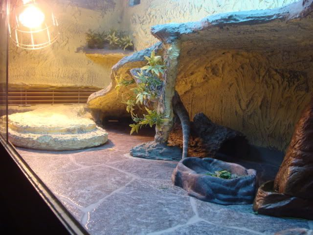 17 best images about bearded dragons habitats and decor - Dragon decorations for a home ...
