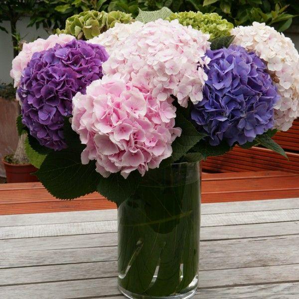 ber ideen zu rosa hortensien tafelaufs tze auf pinterest hortensien tafelaufs tze. Black Bedroom Furniture Sets. Home Design Ideas