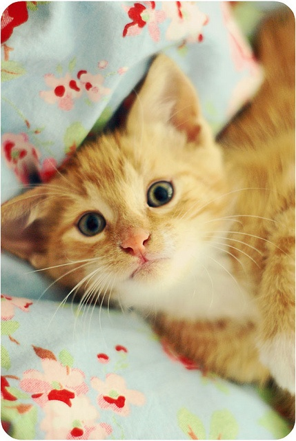 Tilda, the ginger kitten.  This little one reminds me of my friend Carol...ginger...yes...but also her sweet face!  Of all the kitties in this board...this little one has the sweetest face!