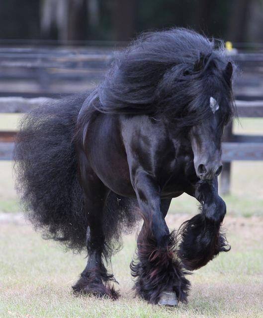 caballo belga de fina estampa, inigualable                                                                                                                                                                                 Más