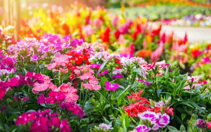 Top 15 Najpopularniejszych Roslin Do Cienia Zielony Ogrodek Plants