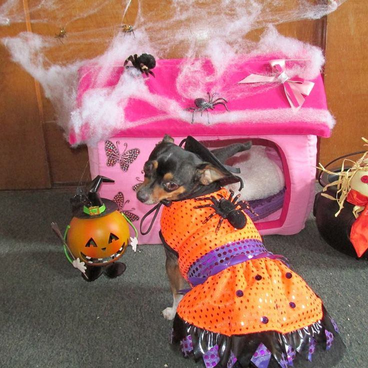 Mejores 36 imágenes de Ropa para perros para dias Festivos en ...