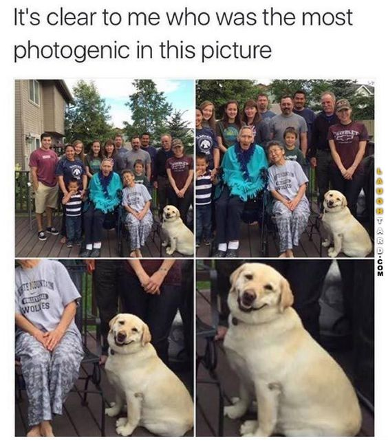 The most photogenic