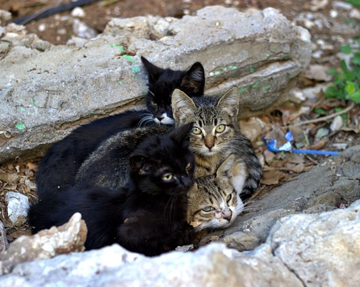 4 little kittens,trying to find some warmth from each other