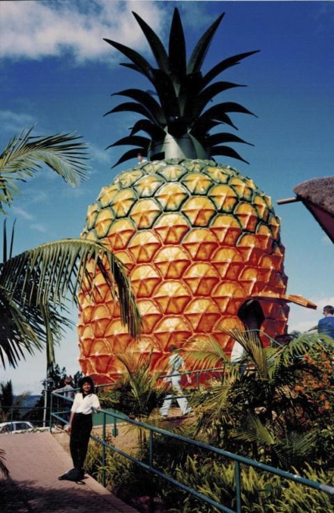 Big Pineapple plantation - Queensland, Australia