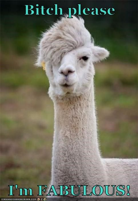 7f048d7156ccee31eeed07cb00c3aaff alpacas funny animals 100 best bitch i'm fabulous images on pinterest funny animals