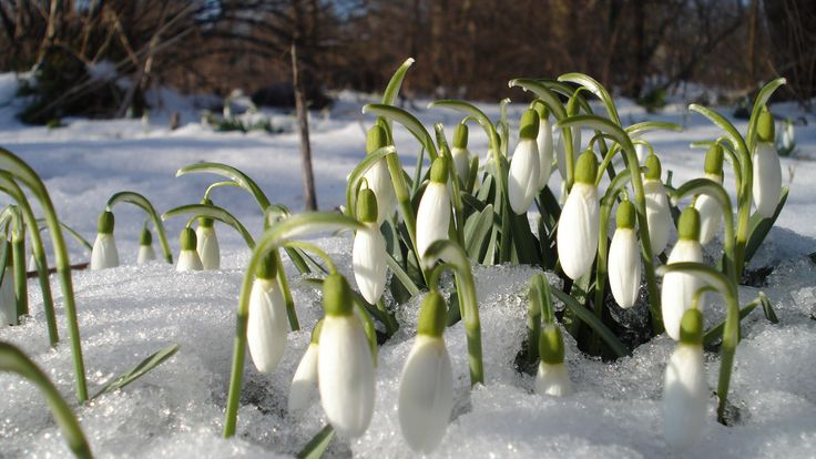 3840x2160 Wallpaper hóvirág, tavasz, virágok, hő, kankalin, szeszes italok, tavasz, felengedett