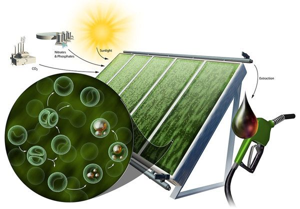 Alternative energy sources are being developed by scientists using algal cells as a biological machine to harness the sun's energy. [Renewable Energy: http://futuristicnews.com/category/future-energy/ ]