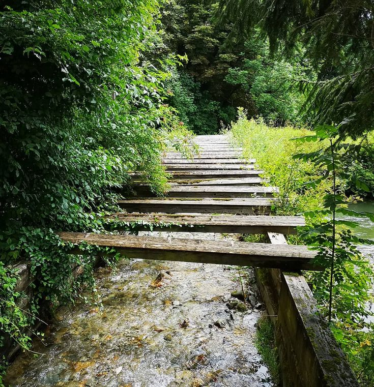 Ein alter Wasserlauf  #insekten #garten #foto #fotografie #stadt #ku