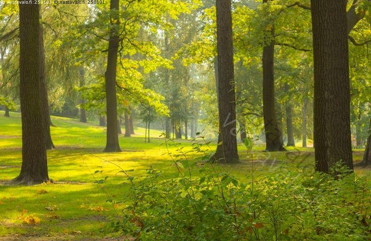 Kaivopuisto - Kaivopuisto jalopuu jalopuut valo varjo syksyinen utuinen tunnelma puisto puu puut puistopuu virkistysalue viheralue ulkoilu ulkoilualue kaupunki kaupunkimaisema Helsinki nurmi nurmikko syksy syksyinen ruska värikäs   syyskuu