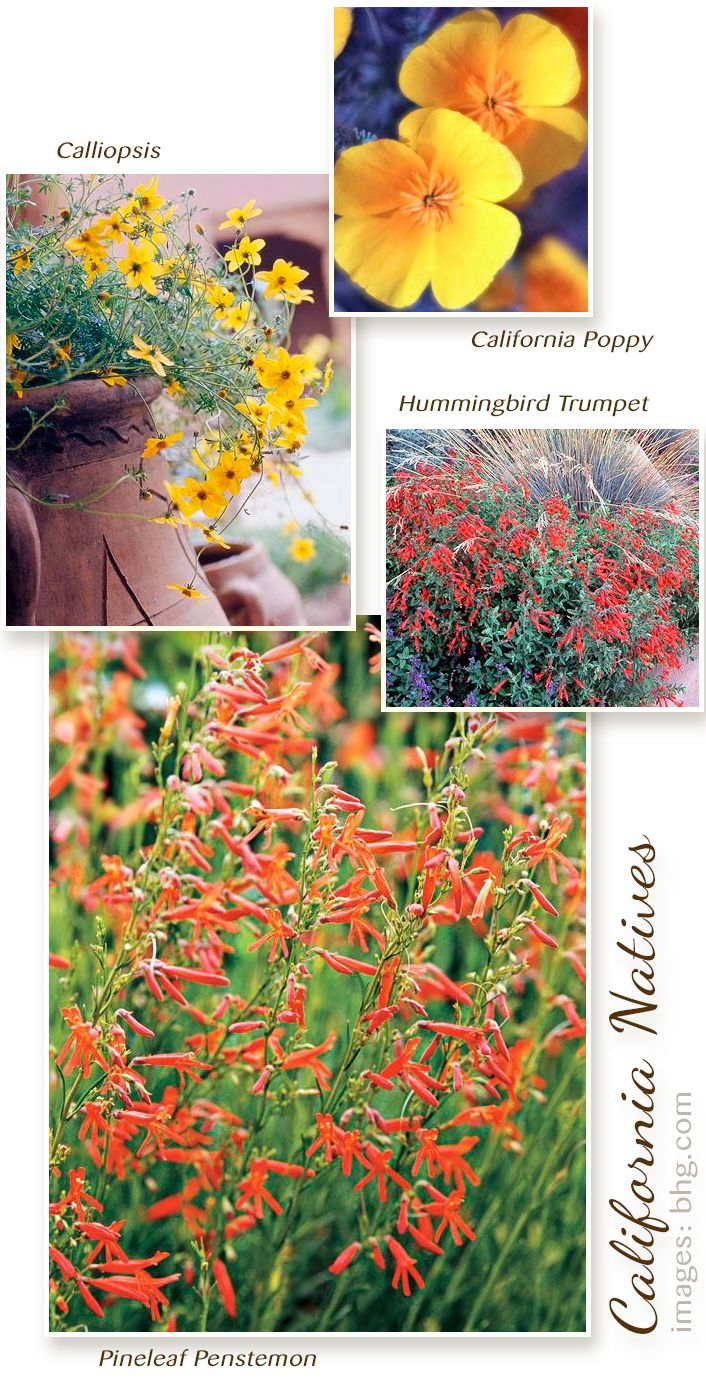 These are four of my favorite California native plants. They're drought tolerant and will grow well in the increasingly warm and dry Southern California garden. For more info: http://www.bhg.com/gardening/gardening-by-region/southern-california/