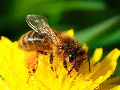 http://www.buzzaboutbees.net/bee-identification.html