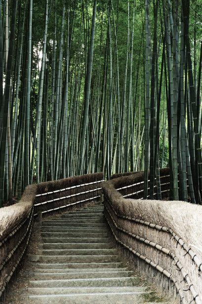 Bamboo path in Sagano, Kyoto, Japan 嵯峨野 京都