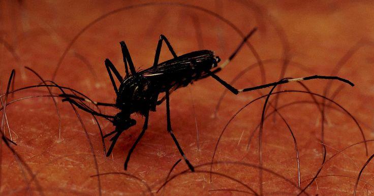 Cómo hacer tu propia cola adhesiva para insectos . Los insectos pueden ser una molestia cuando invaden tu casa o jardín. Libérate de las plagas molestas, haciendo cola casera y pegajosa que atraiga y atrape a los insectos cuando la toquen. Hacer cola pegajosa es relativamente fácil y barato en comparación con muchos otros métodos de eliminación de plagas, y no es peligroso o malo para el medio ...