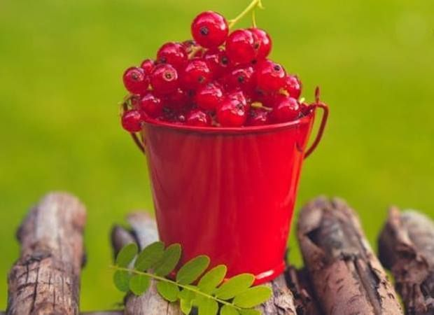 Currants improve mood and boost the immune system