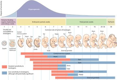 what the society should do to prevent harmful teratogens from damaging prenatal babies Women who suspect they may be pregnant should schedule a visit to their health care provider to begin prenatal care prenatal visits to a health care provider usually include a physical exam, weight checks, and providing a urine sample.