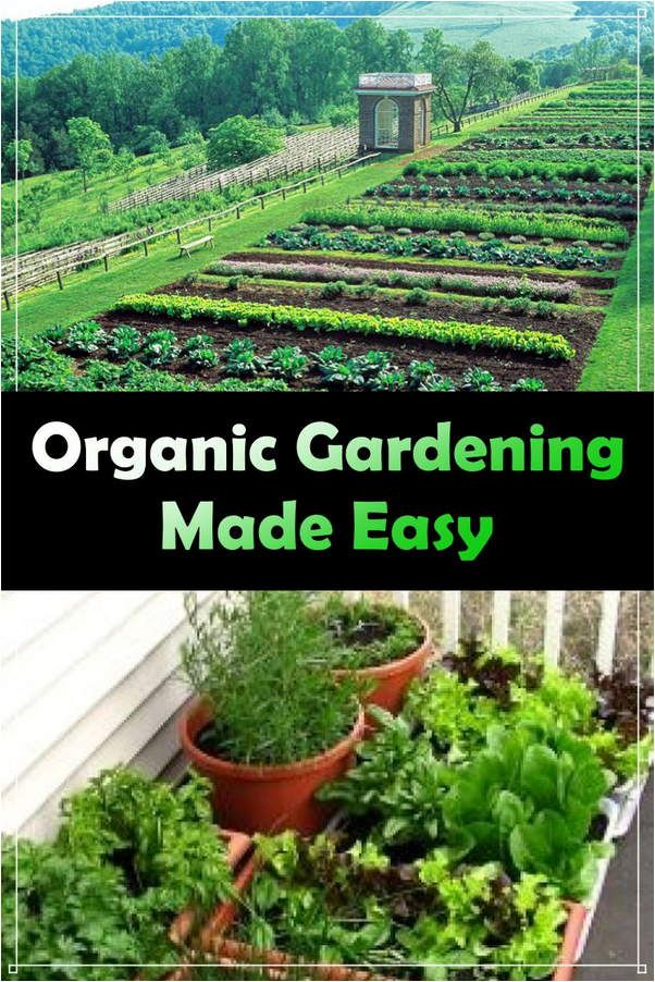Top Organic Gardening Advice From The Experts With Images