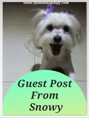 Life and Dog Stuff: Guest Post From Snowy