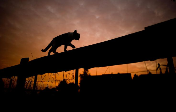 The silhouette of a cat walking on top of a fence stands out against the sky during sunrise near Sehnde, Germany - (EPA/JULIAN STRATENSCHULTE)