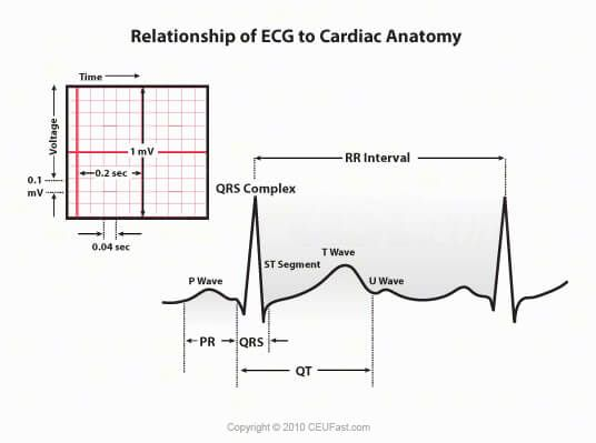 CEUfast.com - relationship of ecg to cardiac anatomy